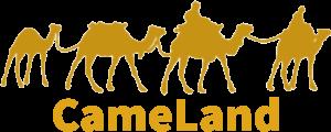 La ferme des chameaux du Néguev